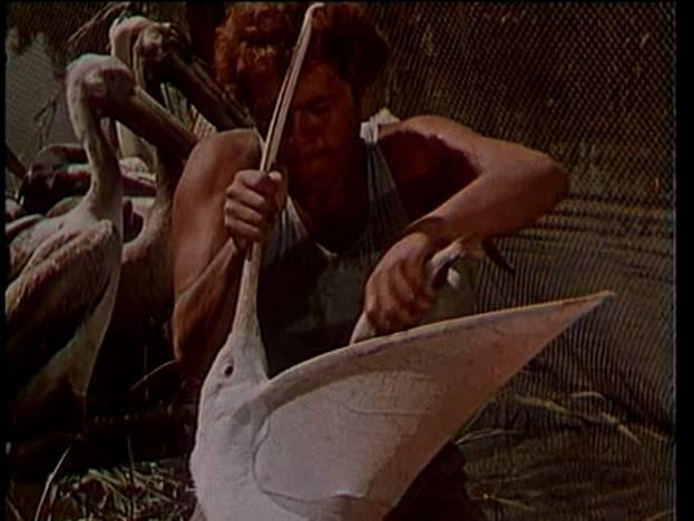 Звероловы 1959 скачать торрент